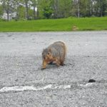 Leave squirrels in the wild