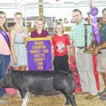 McCoy takes top prize at hog show