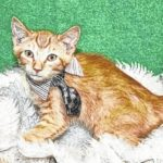 Fayette Humane Society 'Pet of the Week'