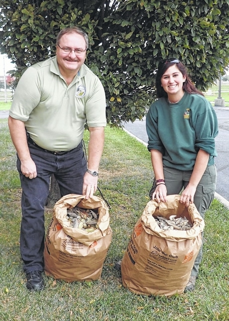 Director Chet Murphy and DOW Private Lands Biologist Emily Archibald with Milkweed Seed Pods collected for the Ohio Pollinator Habitat Initiative.