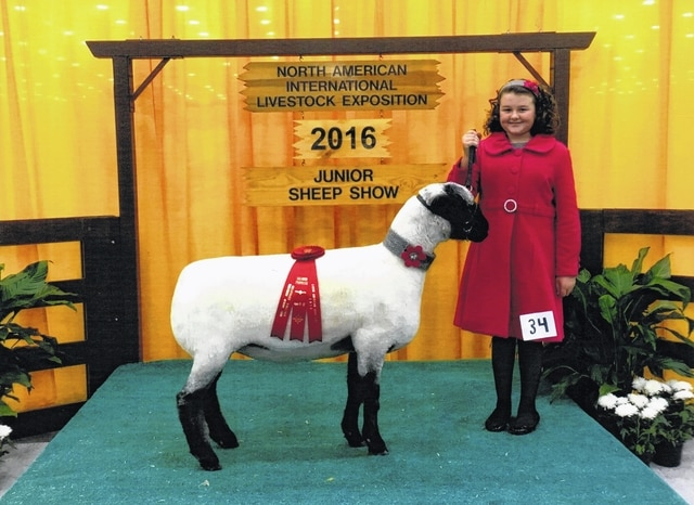 Pictured is Natalie Lauren Lindsey, age 11 of Washington Court House, shown with her Hampshire ewe she raised, as a participant in the recent Sheep Lead at the North American International Livestock Exposition in Louisville, Ky. This concluded Natalie's circuit of fairs for 2016 where she participated at Madison County, Fayette County, The Ohio State Fair, Ross County, Highland County, and the North American. Contestants are judged on garment construction, style or fashion accessories, entrant's poise and appearance, control of animal, presentation and appearance of animal. Natalie is in the sixth grade at Miami Trace Middle School. She resides with her parents Shawn and Aimee Lindsey and brother Nicholas on the family farm. Natalie is the granddaughter of Faith Cottrill of New Holland; and Tom and Connie Lindsey of Mt. Sterling.