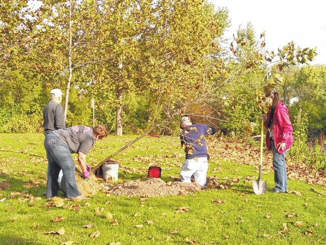 Master Gardeners partner with City of Washington Tree Committee and Modern Woodmen to plant London Planetrees in Washington Park. Pictured (L to R): Don Moore, Brenda Caudill, Don Creamer, and Debra Grover.
