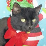 'Binx' looking for home this holiday season