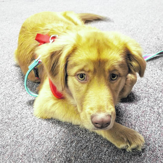 Lily's owner brought her to the Fayette Regional Humane Society at a recent clinic to be spayed.