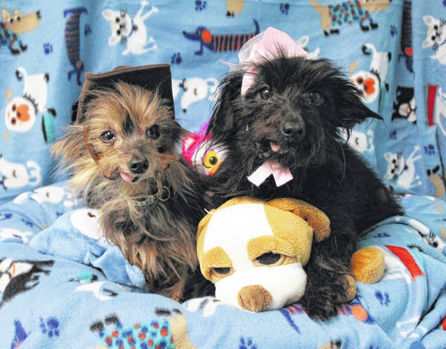 Trip and Daisy are the Pets of the Week.