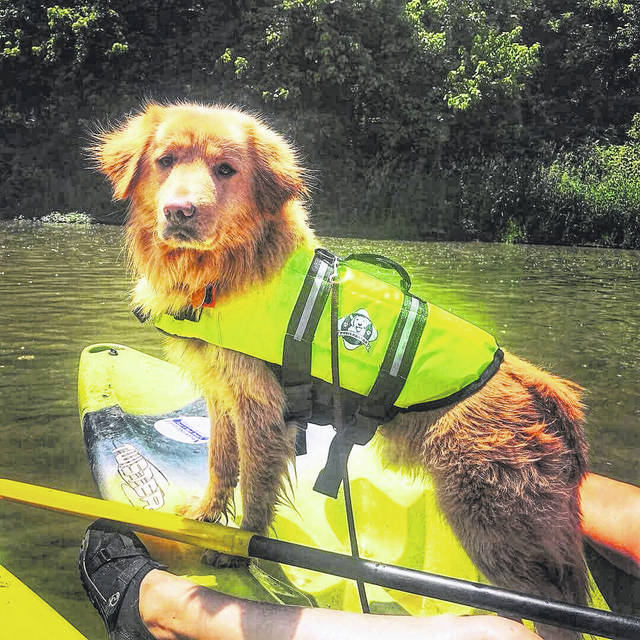 """Bert,"" a golden retriever mix, kayaking with his new family in Cincinnati."