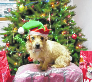 FRHS 'Paws and Claws Christmas' this Saturday