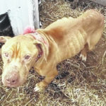 Man pleads 'not guilty' in dog starvation case