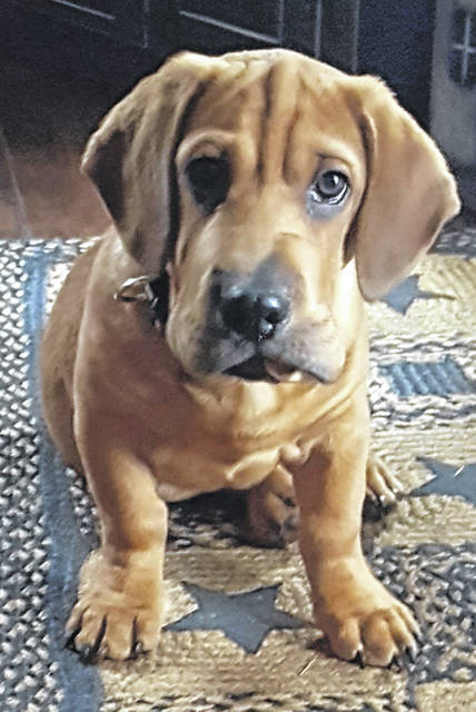"Currently, ""Wally"" is the leading winner in the pet contest with 270 votes. Teresa Rowe is listed as the person who entered him in the contest. His description is, ""Wally is a 2 year old Walrus….look it up, it's a real thing…that we rescued. His wrinkles get wrinkles when he is tired. Who couldn't love that face?"""