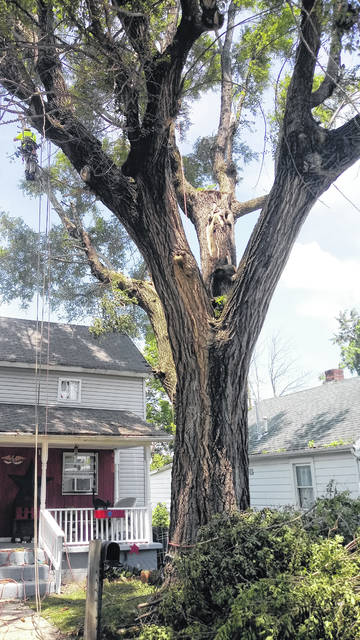 The tree pictured had numerous branches laying on the veteran's home prior to being trimmed.