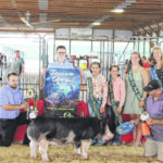 McCoy wins Grand Champion Breeding Gilt