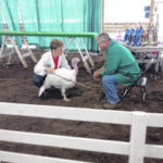 Winners announced at junior fair poultry show