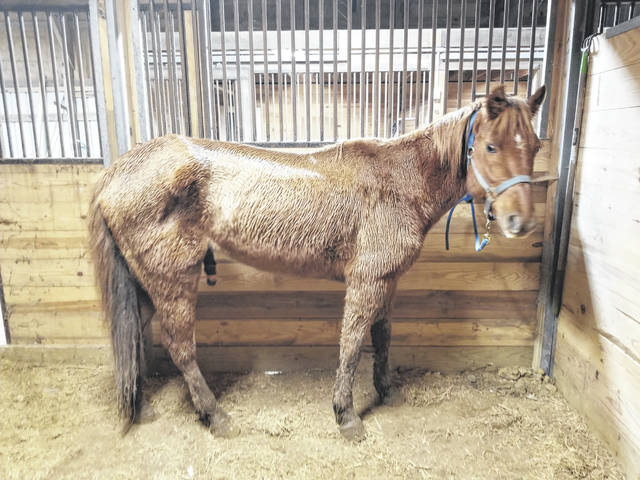 """Charlie"" was reportedly found in a state-of-neglect and was removed from a Ross County property."