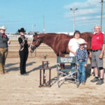 Johnson wins top horse showman prize Tuesday