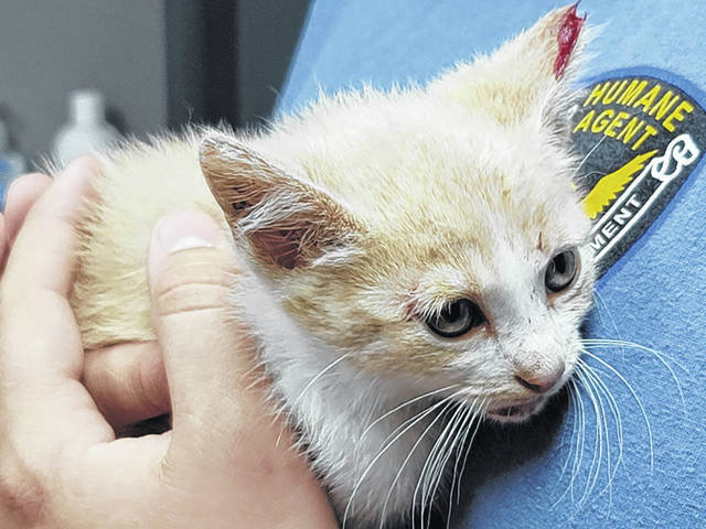 """Late Tuesday evening, a kitten, now named """"Bravo,"""" was seen thrown out of a vehicle window."""