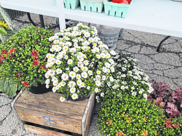 Bridgeview Gardens will be at today's Wednesday Farmers Market with mums and asters, red raspberries, melons, tomatoes, sweet potatoes, red (new) potatoes, squash and zucchini, peppers, and homemade baked goods.