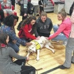 Therapy dog brings emotional support to school