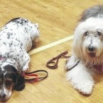 Therapy dogs help with grief in Wheelersburg