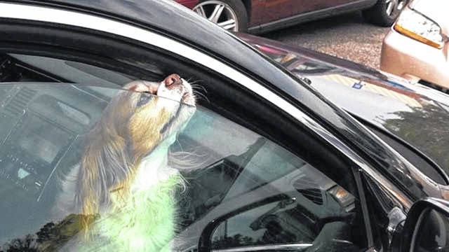 Leaving your pet in a parked car for any amount of time could lead to heatstroke and death.