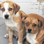 Dog licenses doubling in price next week