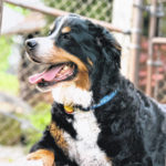 Harley Einstein Jacobs – A Dog Worthy of a Picture on the Front Page