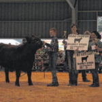 Brown shows Grand Champion steer