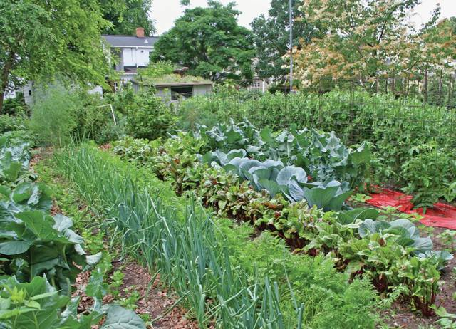 If GMO's and pesticides worry you, home vegetable gardening is a way you can be sure your food is absolutely safe.