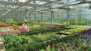 Independent garden centers at risk