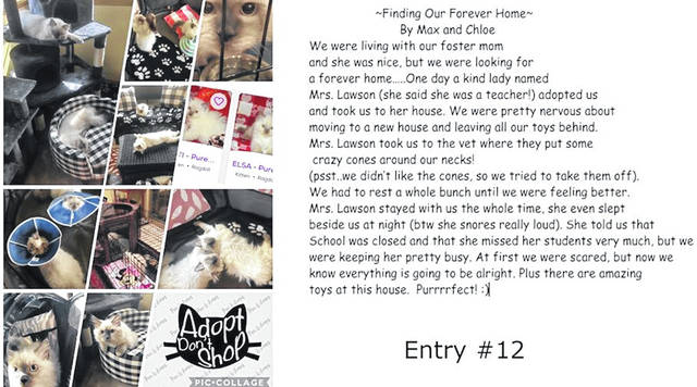 Number 12 entry one of the top four, the adoption of pets.