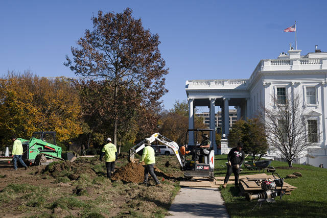 Landscapers work on replacing the lawn of the White House, Monday, Nov. 9, 2020, in Washington. (AP Photo/Evan Vucci)