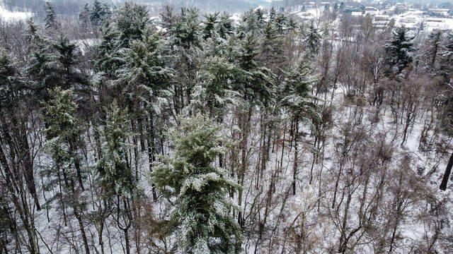 An icy and snowy mountainside in Wheelersburg Ohio Thursday, Feb. 11. Photo Courtesy by Scott Williams