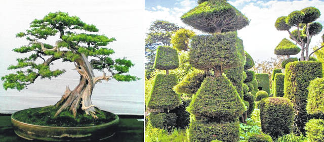 Bonsai (left) and Topiary (right) both require very high maintenance.