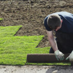 Sod vs. seed: Which is your best option?