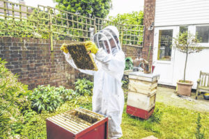 Council weighs adding bee legislation to agenda
