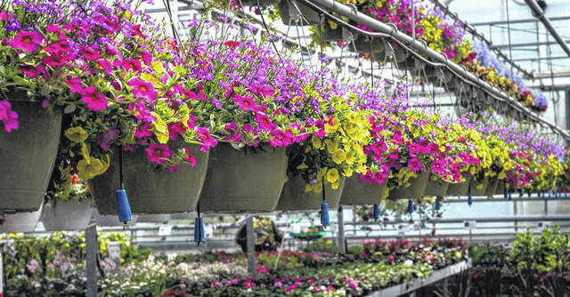 Habitat for Humanity will be selling hanging baskets along with flats of flowers and vegetables starting this Thursday.