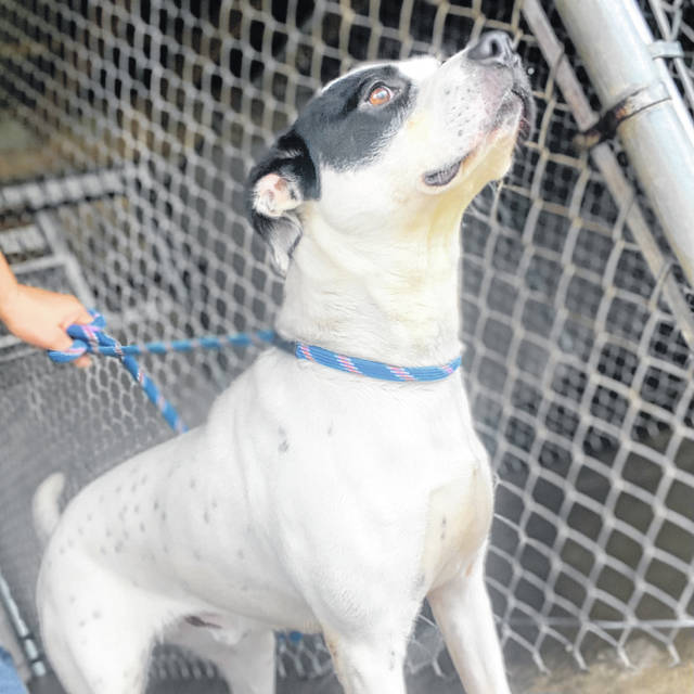 This week's Pet of the Week is one of the special dogs at the Scioto County Dog Shelter.