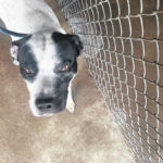 Pet of the week: Thor