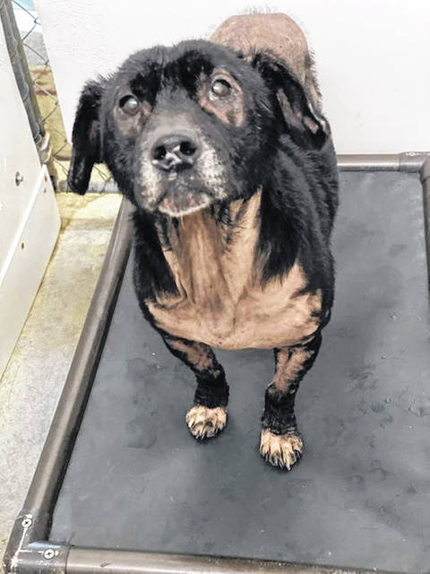This week's Pet of the Week is Bebe one of the special dogs at the Scioto County Dog Shelter.