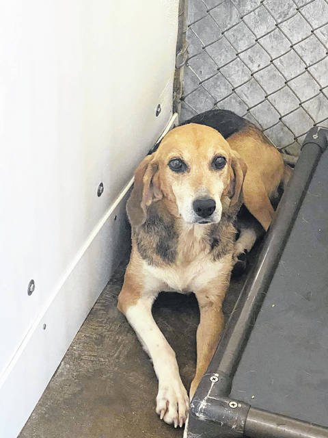 This week's Pet of the Week is Ellie one of the special dogs at the Scioto County Dog Shelter.