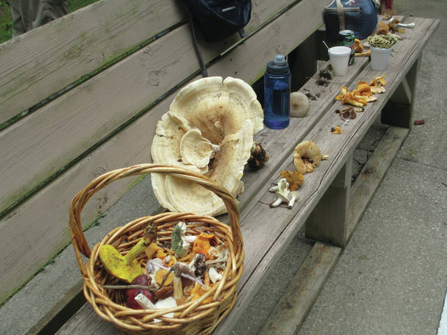 Mushroom hunters collected quite the haul on July 31 during the Fantastic Fungi Hunt event at Shawnee State Park.
