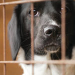 Guide to adopting a shelter dog