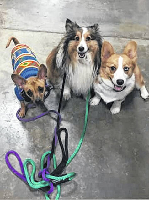 These dogs like your own are just waiting for a walk, bring your dog down to the River Front for the 1st Annual Larry Lonney Dog Walk this Saturday.