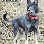 Adoptable Dog of the Week