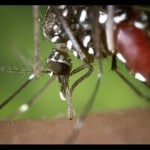 Questions and answers about mosquito spraying