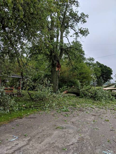 Trees down in Climax after Monday night's storm.