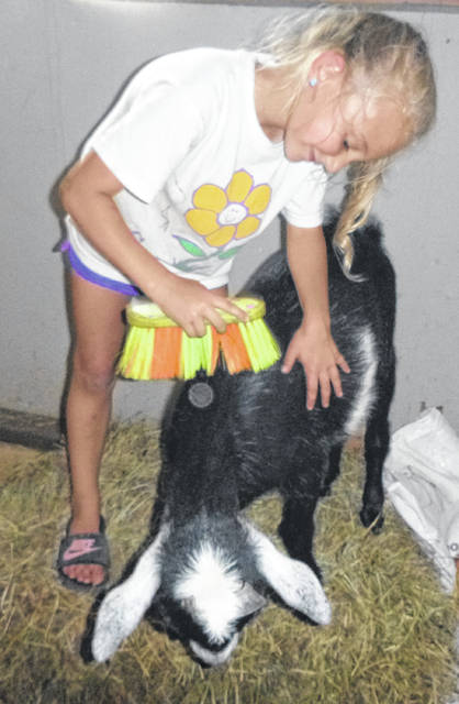 Sophia Davis, 6, brushes Mario, one of the goats at Hazlewood Petting Zoo.