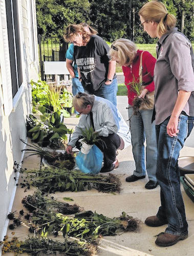 "OSU Extension Educator, Carri Jagger at right, looks over the plants brought in by Master Gardeners for the ""plant swap' after the August garden class."