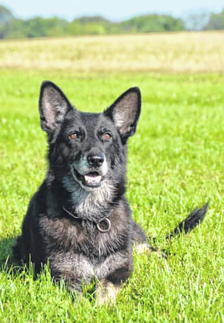 Dixie served 6 years as a K-9 officer for Morrow County.