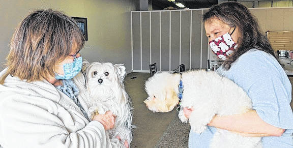 Cindy Rose (left) with her Morkie (Maltese and Yorkie) and All Star Grooming owner Kim Holycross with her poodle Frankie.