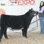 Local youth win at Ohio Beef Expo